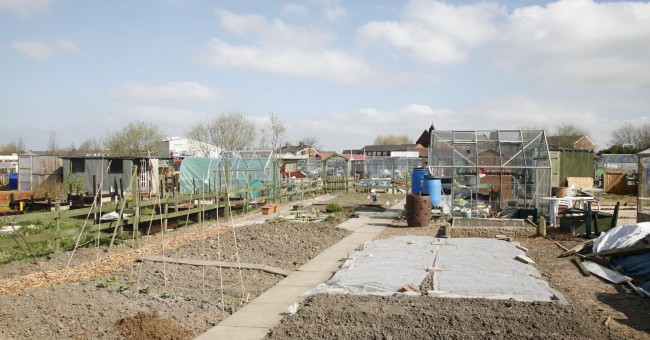 Edge Lane Allotments